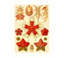 Starfish - Ernst Haeckel  Art Print