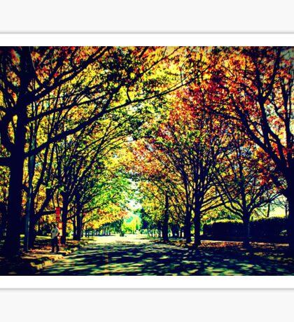 Autumn In Canberra Sticker