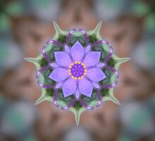 Spiderwort Flower Reflections by Eggtooth