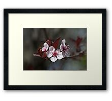 Trio of pink Blossom Framed Print