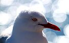 Portrait Of A Red-billed Gull by Evita