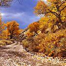 High Desert Autumn by SB  Sullivan