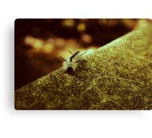 friend Canvas Print