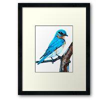 Faith is a Bluebird Framed Print