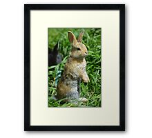 Cornellius the most entertaining bunny ever Framed Print