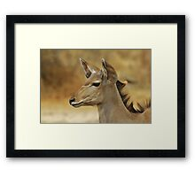 Kudu Bull Calf - Innocent Beauty Framed Print