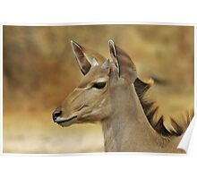 Kudu Bull Calf - Innocent Beauty Poster