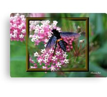 Something with Wings Canvas Print