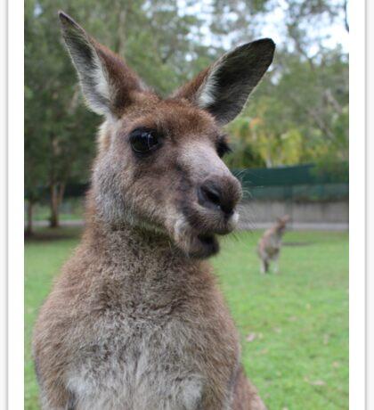 Kangaroo selfie Sticker