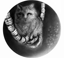 CIRCLE ART - CAT WALKS ON WIRE by Lambkin Shepherd