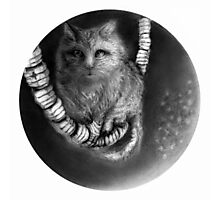 CIRCLE ART - CAT WALKS ON WIRE Photographic Print