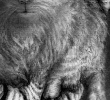 CIRCLE ART - CAT WALKS ON WIRE Sticker