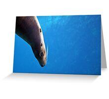 Cheeky Sea Lion Watercolor Greeting Card