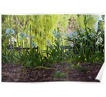 Ground Level Flowers Poster