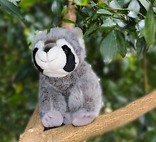 Ricky Racoon by Sharon Brown