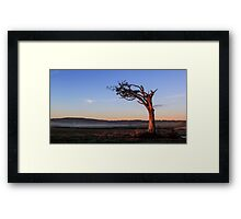 A Tree, Boughing to Nature Framed Print