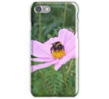 Bumble Bee on Cosmos Flower iPhone Case/Skin
