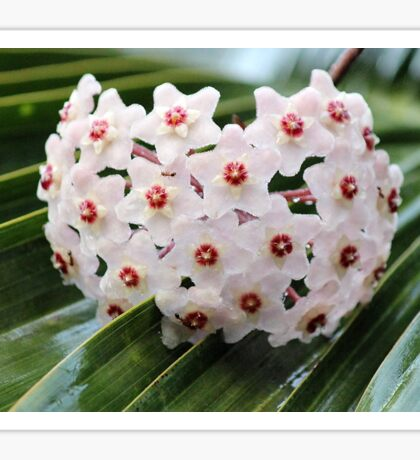 White Florets Sticker