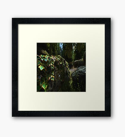 Foliage on a Wall Framed Print