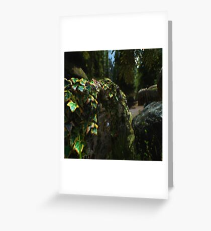 Foliage on a Wall Greeting Card