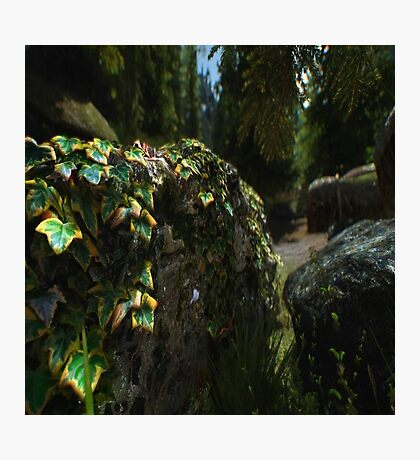 Foliage on a Wall Photographic Print