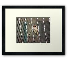 No One To Join Me? Framed Print