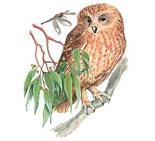 Boobook Owl & Dragonfly Photographic Print