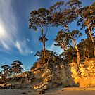 HDR Hanssons Beach trees - Bruny Island, Tasmania by PC1134