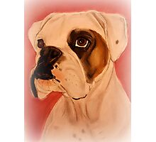 Boxer Dog Lovers Photographic Print