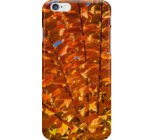Orange Autumn Lines and Diagonals - the Burning Bush iPhone Case/Skin