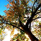 Looking Up At Autumn...Caldwell, Idaho by Diane Arndt