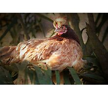 Mrs Henny Penny Photographic Print
