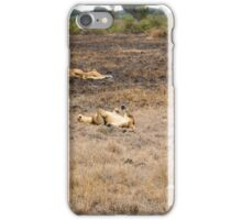 lions in the African bush iPhone Case/Skin