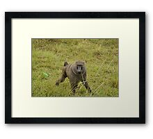 baboon in the african bush Framed Print