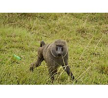 baboon in the african bush Photographic Print
