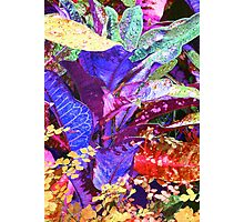 Fantasy Colored Leaf Abstract Photographic Print