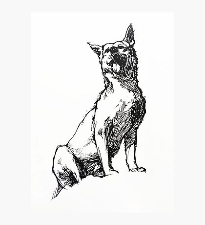 Dingo - ink drawing Photographic Print