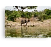 Elephant in the african savannah Canvas Print