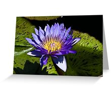 Dragonfly on a Lilypad Greeting Card