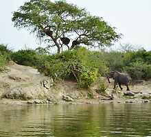 Elephant in the african savannah by spetenfia