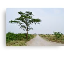 road in the African savanna Canvas Print