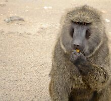 baboon in the african bush by spetenfia