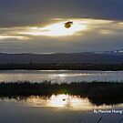 Late Afternoon at Sacramento National Wildlife Refuge by Maurine Huang