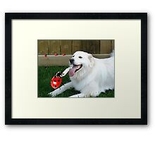 OH...LADYBUG ...THATS A COOL DRINK OF WATER...(CANINE-LADYBUG) - PICTURE & CARD & PILLOW -TOTE BAG Framed Print