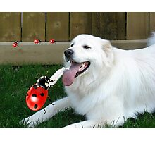 OH...LADYBUG ...THATS A COOL DRINK OF WATER...(CANINE-LADYBUG) - PICTURE & CARD & PILLOW -TOTE BAG Photographic Print