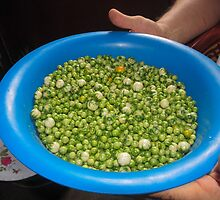 legumes and beans by spetenfia