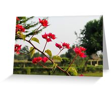 african flower Greeting Card