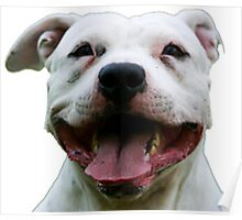 PLAYFUL PUPPY PIT BULL Poster
