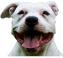 PLAYFUL PUPPY PIT BULL Photographic Print
