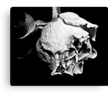 Passato il primo Rose Canvas Print
